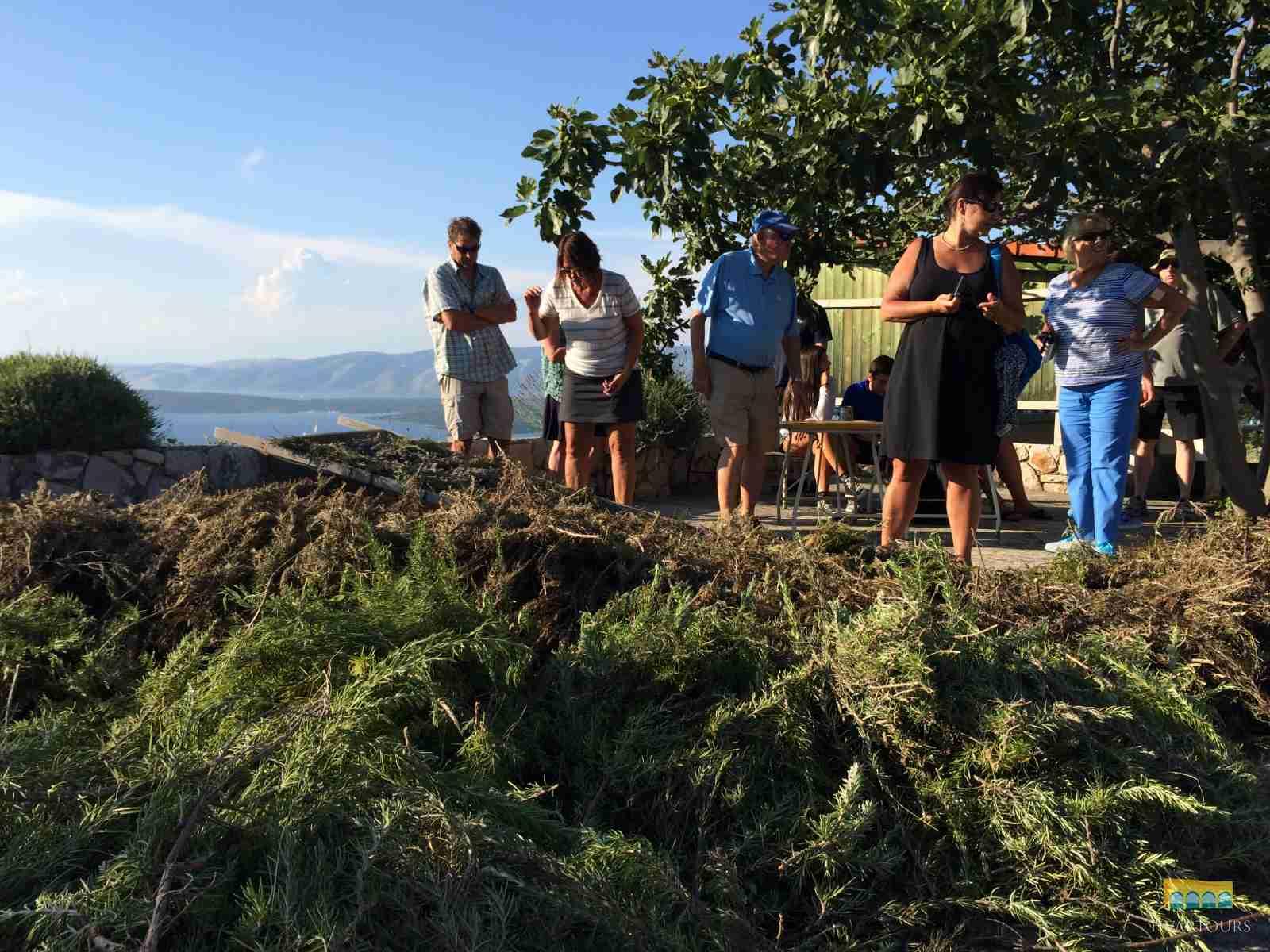 Private Hvar Island Discovery